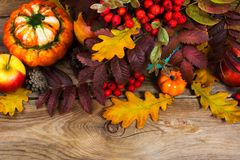 Thanksgiving or fall background with red berries, pumpkins, rowa. N and oak leaves on the rustic wooden table Stock Photography
