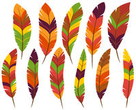 Thanksgiving or Fall Colored Feathers. Thanksgiving or Fall Colored Turkey Feathers stock illustration