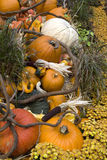 Thanksgiving and fall decor Stock Images