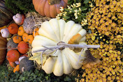 Thanksgiving and fall decor Royalty Free Stock Photo