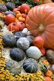 Thanksgiving and fall decor Stock Photos