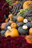Thanksgiving and fall decor Royalty Free Stock Images