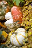 Thanksgiving and fall decor Royalty Free Stock Image