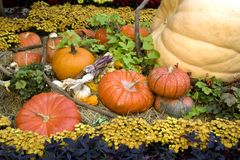 Thanksgiving and fall decor Royalty Free Stock Photography