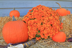 Thanksgiving Fall Harvest Pumpkin Maize Flower hay Stock Photos