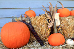 Thanksgiving Fall Harvest Pumpkin Maize over hay Royalty Free Stock Image