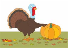 Free Thanksgiving Fat Turkey With Huge Pumpkin Stock Photography - 21435142