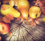 Thanksgiving frame background. Autumn leaves, apples and pears Stock Photos