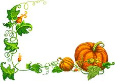 Thanksgiving frame with nice orange pumpkins Stock Photos