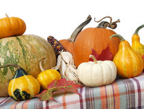 Thanksgiving gourds pumpkins Stock Photo