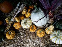 Thanksgiving gourds. Pumpkins and Indian corn on a hay bale stock photos