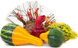 Thanksgiving Gourds with Turkey Centerpiece Royalty Free Stock Images