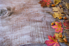 Thanksgiving  greeting with acorn and fall leaves on wooden back Stock Image