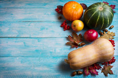 Thanksgiving  greeting with pumpkins and apples on blue wooden b Royalty Free Stock Photo
