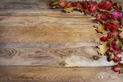 Thanksgiving  greeting with red berries, acorn, fall leaves on w Royalty Free Stock Images