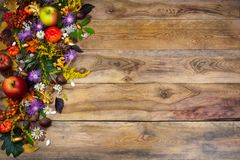 Thanksgiving greeting with yellow and purple flowers Stock Image