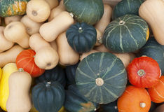 thanksgiving or halloween decorative squash at marketplace Stock Photos