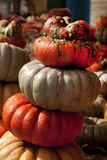 Thanksgiving Halloween Pumpkins Stock Images