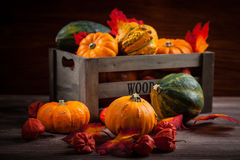 Thanksgiving and  Halloween Royalty Free Stock Photos