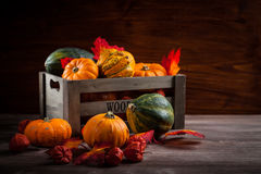 Thanksgiving and  Halloween Royalty Free Stock Image