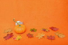 Thanksgiving Hamster Peeking Royalty Free Stock Images
