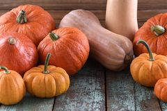 Thanksgiving, Harvest festival bright orange pumpkins on old blu. E wooden background closeup Royalty Free Stock Images