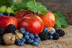 Thanksgiving harvest still life Royalty Free Stock Photo