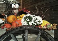 Thanksgiving Harvest Stock Photography