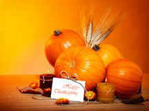Thanksgiving holiday decoration Stock Images