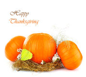 Thanksgiving holiday greeting card royalty free stock images