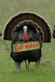 Thanksgiving Humor: 'Eat Ham' Turkey. Humorous photo of a wild turkey carrying an eat ham sign Stock Photography