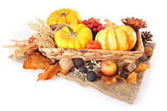 Thanksgiving with jute bag. Thanksgiving - different pumpkins, apple, berries, nuts and grain on jute bag in rattan basket on white background Stock Image