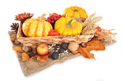 Thanksgiving with jute bag. Thanksgiving - different pumpkins, apple, berries, nuts and grain on jute bag in rattan basket on white background Stock Images
