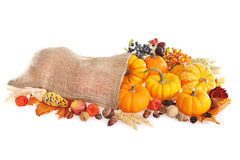 Thanksgiving with jute bag. Thanksgiving - different pumpkins, apple, berries, nuts and grain in jute bag on white background Stock Images