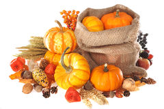 Thanksgiving with jute bag. Thanksgiving - different pumpkins, apple, berries, nuts and grain in jute bag on white background Royalty Free Stock Images