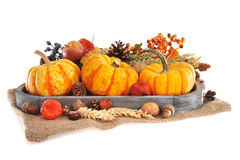 Thanksgiving with jute bag. Thanksgiving - different pumpkins, apple, berries, nuts and grain on jute bag in wood basket on white background Royalty Free Stock Image