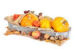 Thanksgiving with jute bag. Thanksgiving - different pumpkins, apple, berries, nuts and grain on jute bag in wood basket on white background Stock Photos