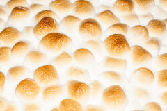 Thanksgiving Marshmallows Stock Images