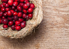 Thanksgiving nest of berries Royalty Free Stock Photos