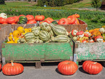 Thanksgiving produce display Royalty Free Stock Images