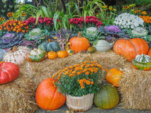 Thanksgiving produce display Royalty Free Stock Photos