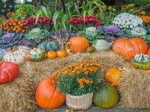Thanksgiving produce display Royalty Free Stock Photos