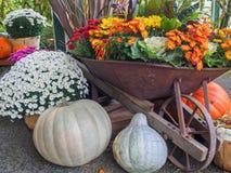 Thanksgiving produce display Royalty Free Stock Image
