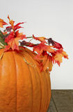 Thanksgiving Pumpkin Stock Image