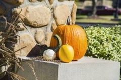Thanksgiving Pumpkin Patch Display Stock Photos