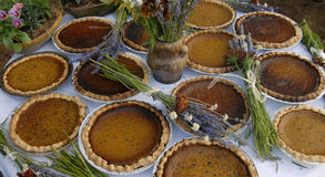 Thanksgiving pumpkin pies, many of them. An array of authentic pumpkin pies Stock Photos