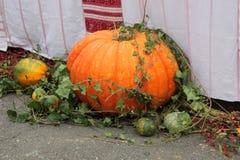 Thanksgiving Pumpkin Scene Stock Images
