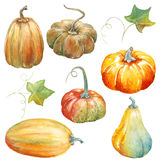 Thanksgiving Pumpkin watercolor clipart Royalty Free Stock Images