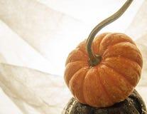 Thanksgiving pumpking orange de carte de voeux de fond photos libres de droits