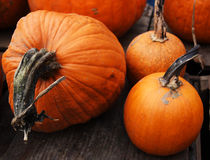 Thanksgiving Pumpkins. Thanksgiving Pumpskins for sale Royalty Free Stock Images